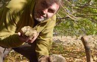 Η δεύτερη μεγαλύτερη ποσότητα λευκής τρούφας βρέθηκε στη Βόρεια Ελλάδα