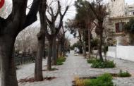 Βόλος: Ξήλωσαν 15 δέντρα για μονοδρόμηση