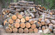 Έκλεψε τόνους ξύλα και τα έβαλε στην αποθήκη του!
