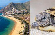 Ισπανία: γιατροί βρήκαν νεκρή χελώνα μέσα στον κόλπο γυναίκας