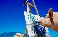 Pigcasso: Ένας διαφορετικός… καλλιτέχνης!